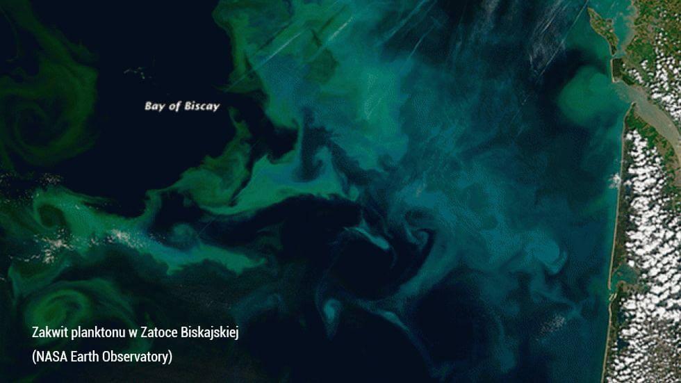 Vortex miejsce poboru plazma morska Quinton